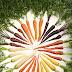 Los colores de la zanahoria