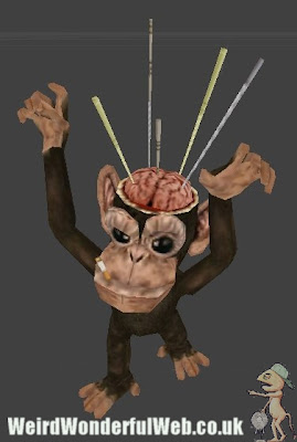 IMAGE: Monkey with exposed brain