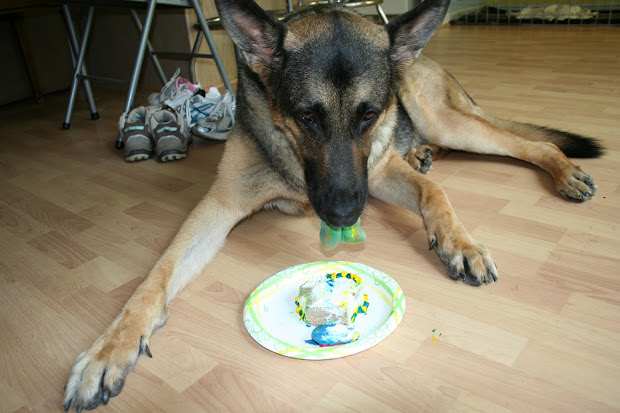 German Shepherd Mom Birthday Boy