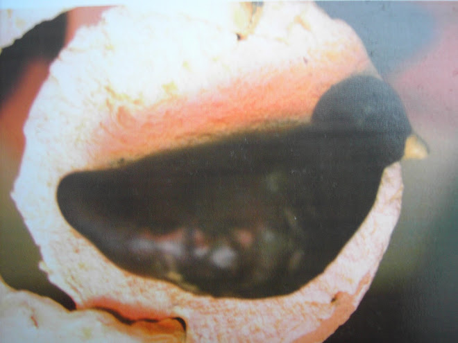 colivia (detliu, 2005)