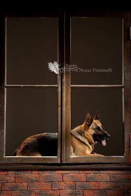 koer lamab aknalaual