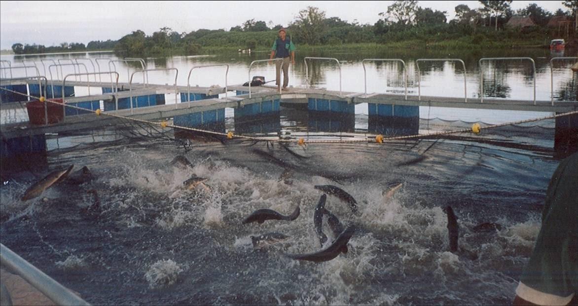 Acuicultura per situaci n actual del la acuicultura de for Tipos de estanques para acuicultura