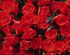 Mar de rosas, para a minha Mãe