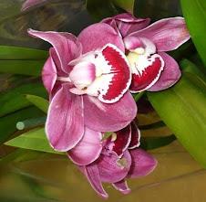Orquídea da minha xará