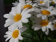 Besøk gjerne min nye bildeblogg