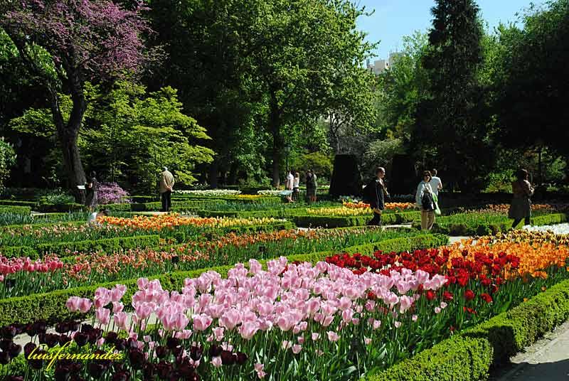 Ocio y cultura real jard n bot nico madrid viii for Ocio y jardin