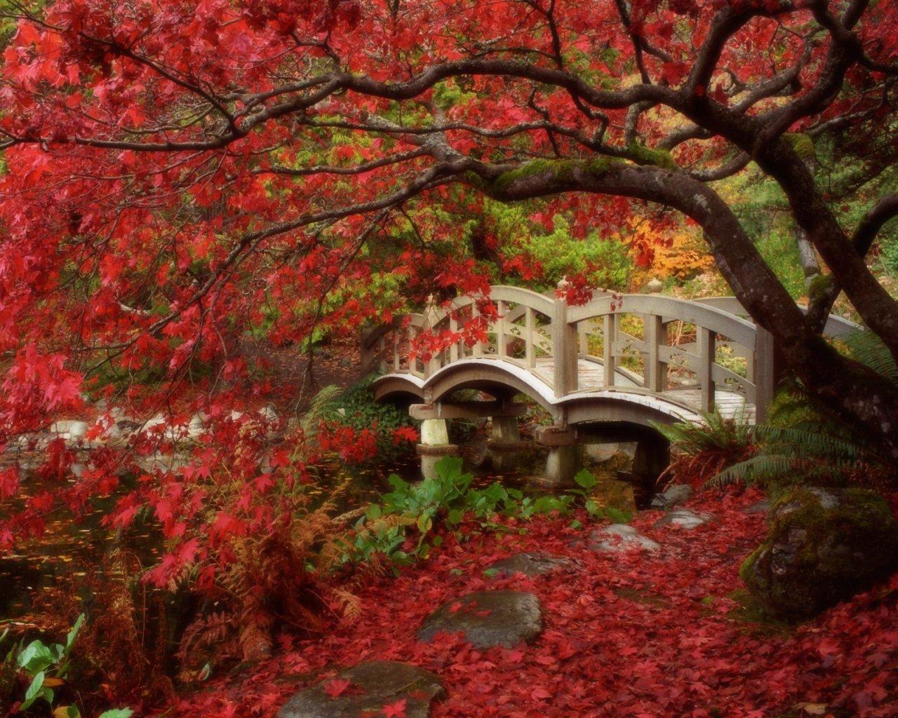 http://3.bp.blogspot.com/_Se-QKUZ5e80/S-L8Bu3oEnI/AAAAAAAAAAs/vMAOYej71-0/s1600/jardin_japones.jpg