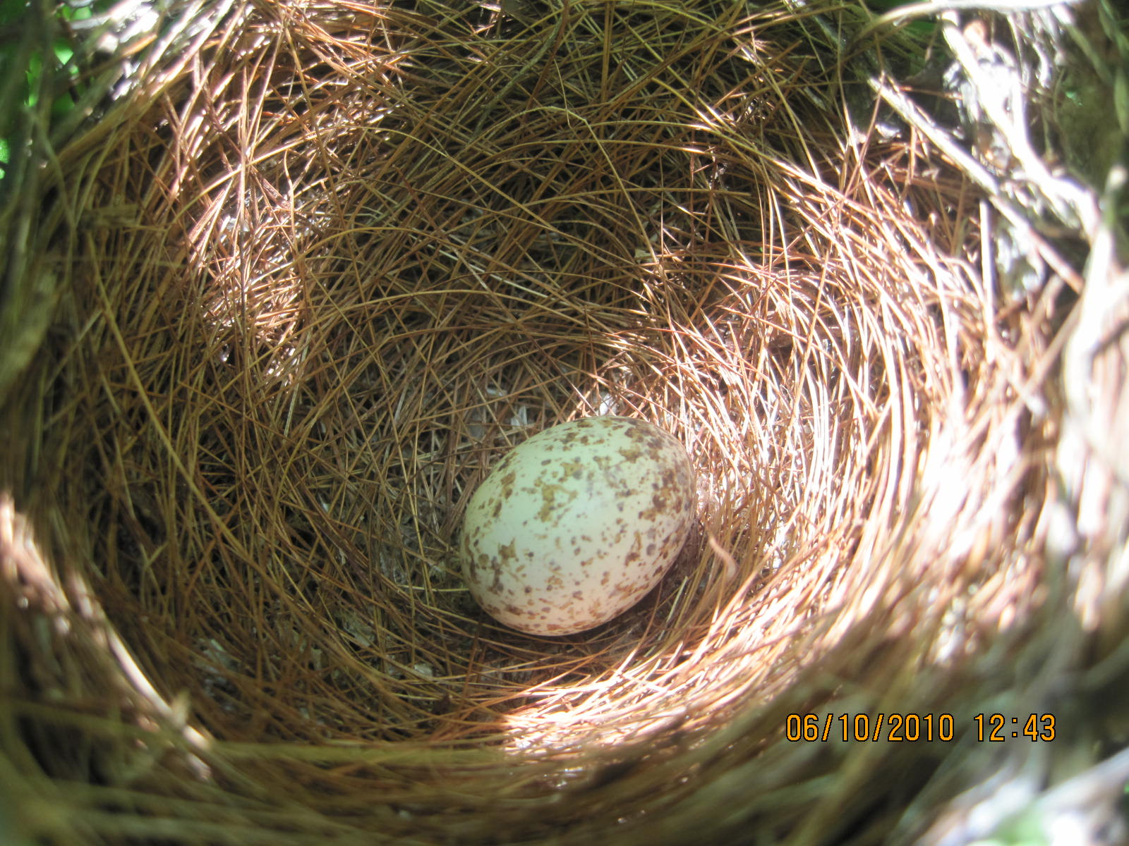 Cardinal Nests And Eggs Images & Pictures - Becuo
