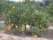 La Naranja!