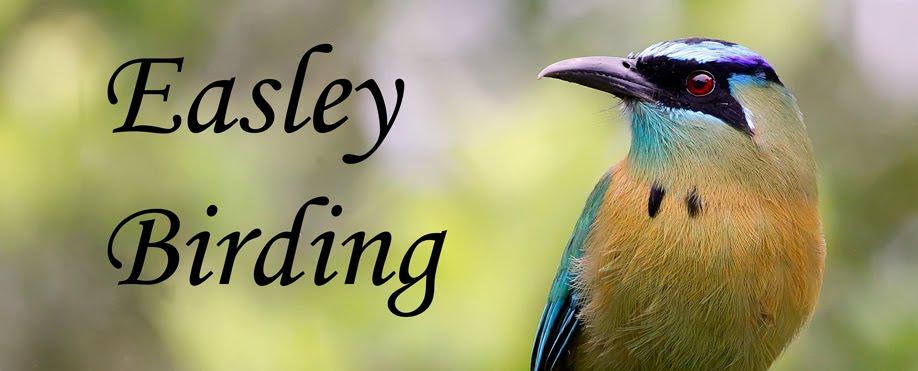 Easley Birding