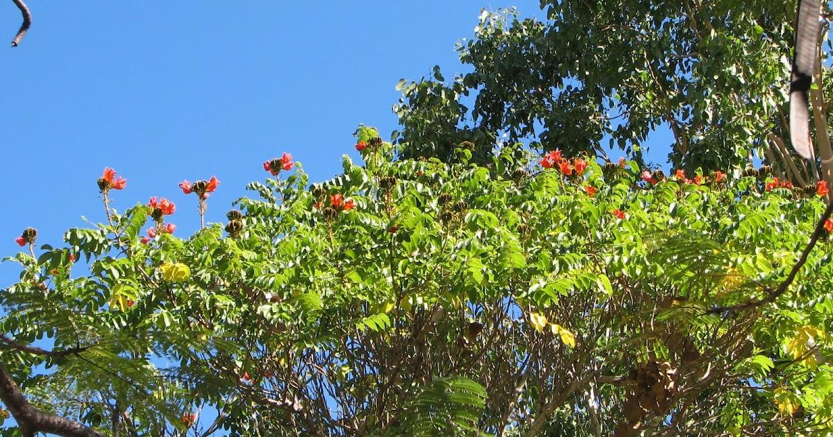 dry tropics garden african