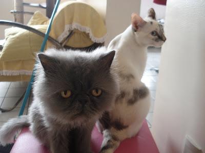 Gato Feliciano e Gata Lili sentados no puff rosa