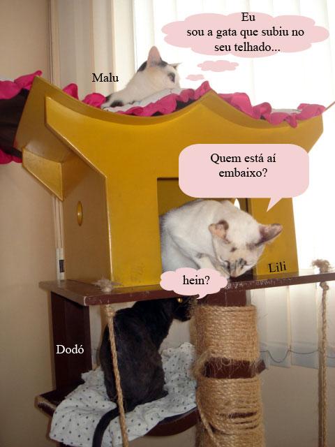 Gatas Malu, Lili e dodó, cada uma num dos andares da casinha para gatos