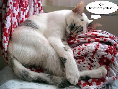 Gata Lili faz a rede de travesseiro e dorme tranquilamente