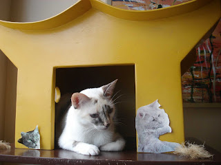Gata Lili na casinha para gatos