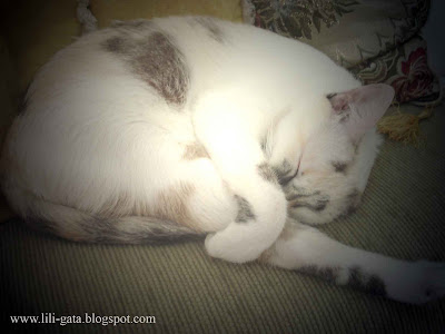 """Gata Lili dormindo na posição """"caroço de feijão"""""""
