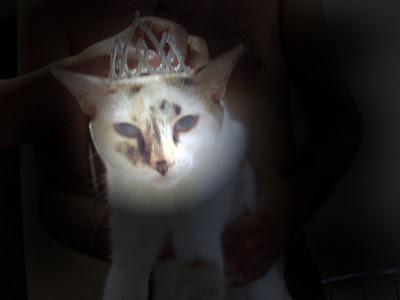 Gata Lili e sua coroa de princesa