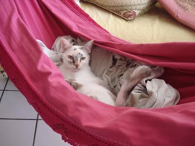 Gata Lili deitada na rede rosa