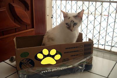 Gata Lili dentro da caixa de papelão