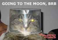 Gato com a cabeça enfiada numa vasilha se passa por astronauta