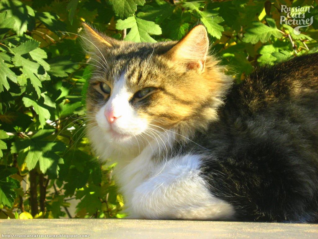 Sniffy Tabby Cat