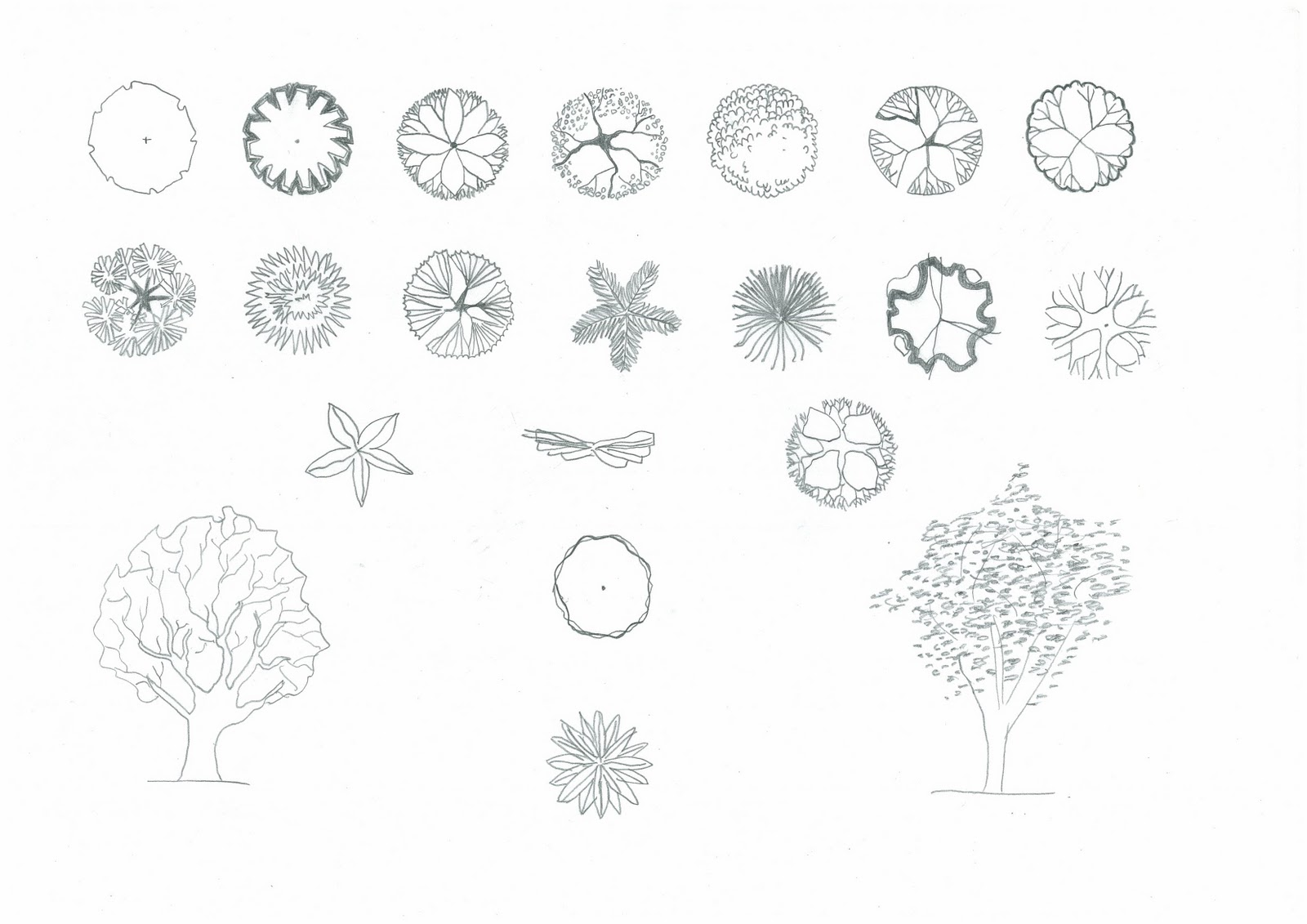Architectural Trees Drawings Architectural Tree Symbols