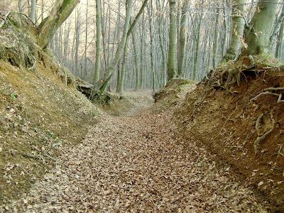 Šumski put do Grohota