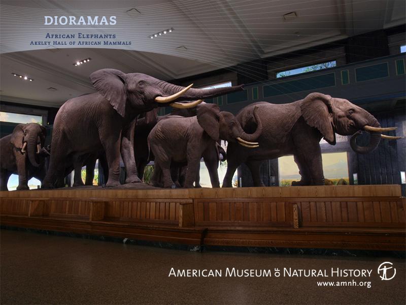 elephant wallpaper. Ewan Dietsche, Dog, 9 years