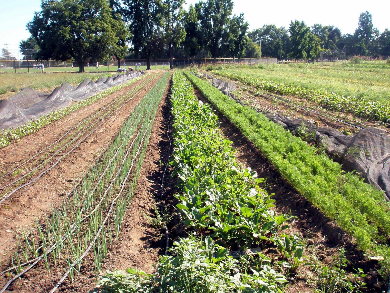 Fievel goes west soil born farm for Soil born farms
