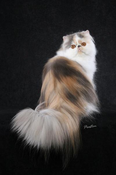 wallpaper kucing lucu. wallpaper kucing comel.