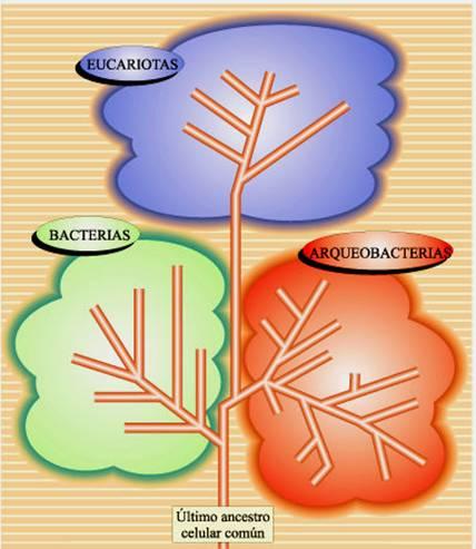 celula procariota y eucariota. y eran células procariotas
