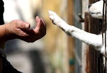 DAVA - Derecho a la vida animal