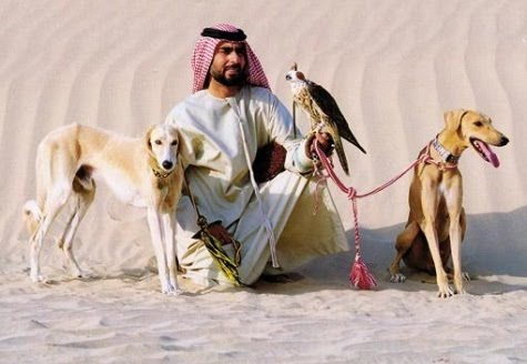 Dogs And Cats For Sale In Dubai