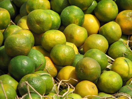 http://3.bp.blogspot.com/_SpvCKzTNAVY/SwkgNA2vWSI/AAAAAAAABJc/ns9nCCidFI8/s1600/Mosambi.JPG