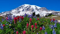 Mt. Rainier Wildflowers Art Canvas $125