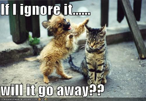 funny-pictures-cat-ignores-dog.jpg