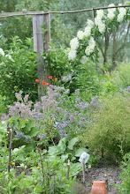 Les après midi au jardin d'Hélène