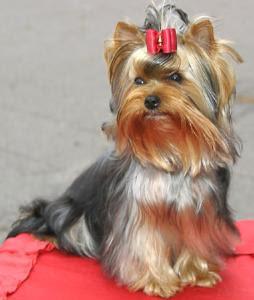 Ver fotos de perritos cachorros 70