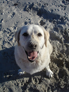 Sandy Diesel loves the beach!