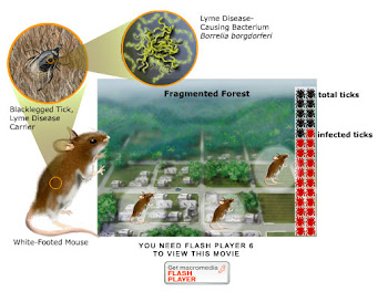 Biodiversity-Landscape Change and Lyme Disease - Science and Application