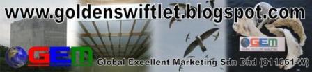 Industri Sarang Burung Walit / Walet ( Walet Emas - Golden Swiftlet) GEM v2