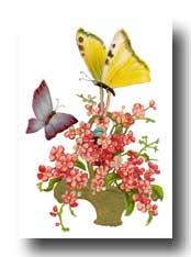 [drawings-of-butterflies-3-t.jpg]