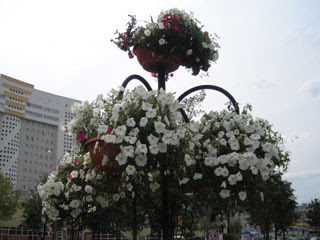 И еще раз цветочки