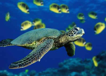 Animales en peligro de Extinción y especies en Extinción