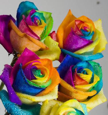 http://3.bp.blogspot.com/_SvBDjjzaqUQ/S4DzJUpPr8I/AAAAAAAACS4/b2UKo7ocOEc/s400/roses_450x479.jpg