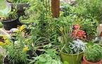 Herbs In Containers - Five Herbs To Consider