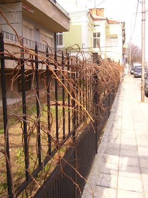 Grapevine Garden Fences in Yambol