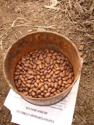 Bean Day On The Farm