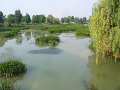 Yambol's Tundzha River After Heavy Rainfall