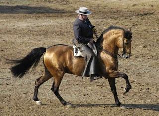 Pelajes de caballos [Fotos]